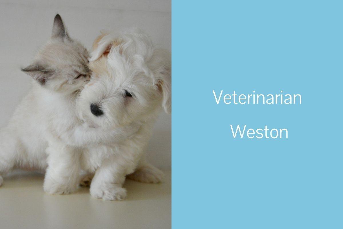 Veterinarian-Weston
