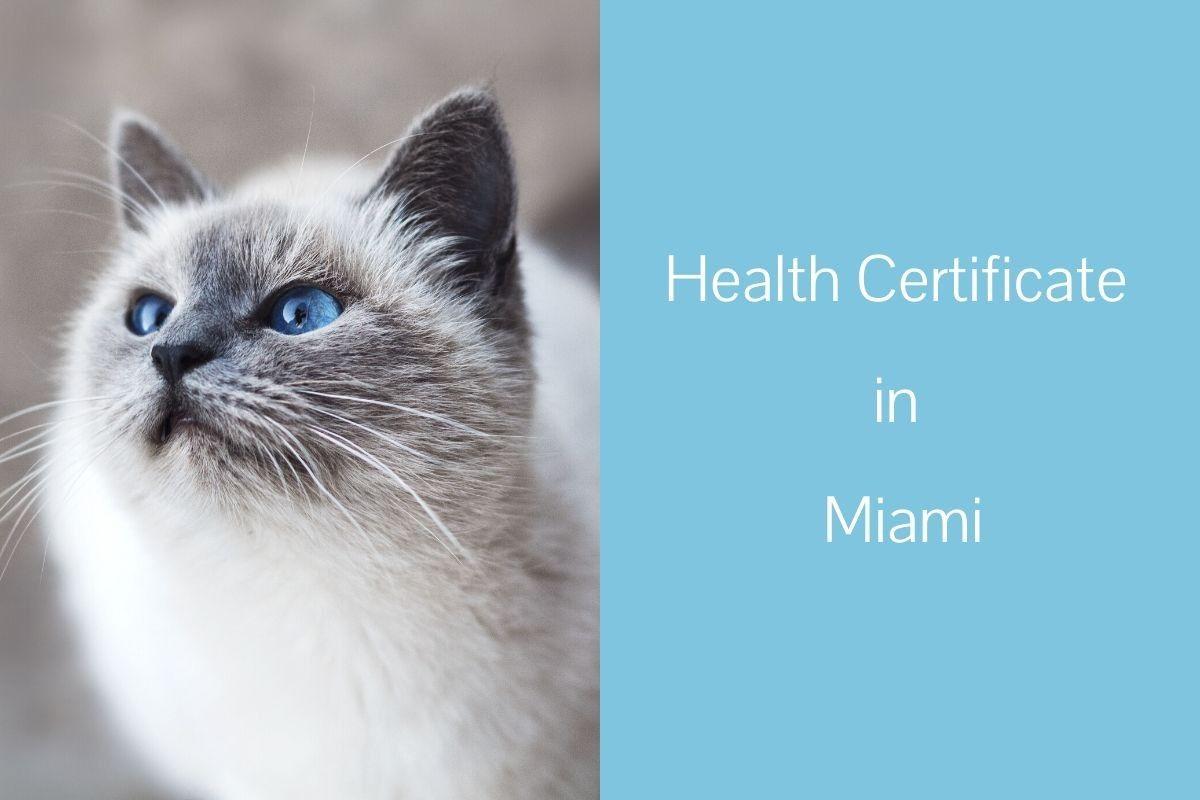 Health-Certificate-in-Miami
