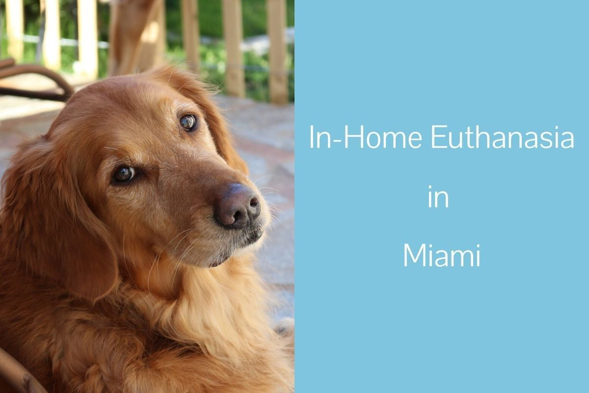 In-Home-Euthanasia-in-Miami