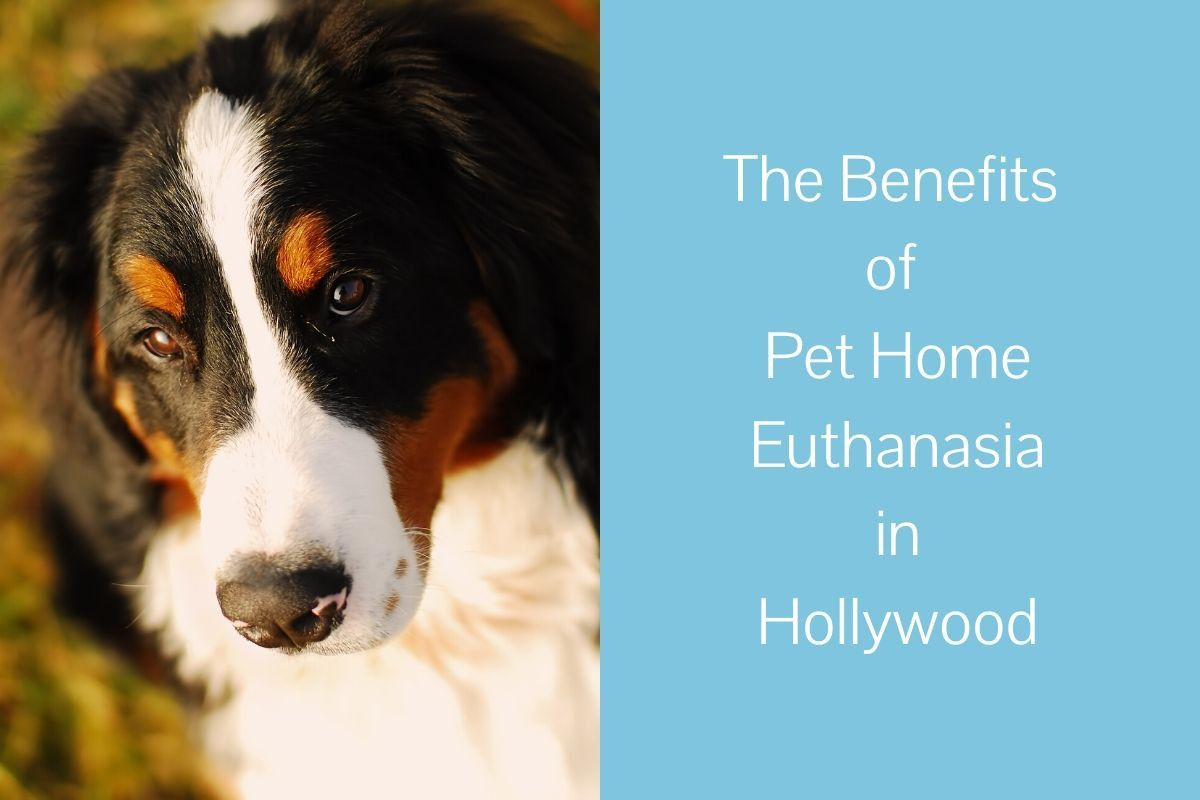 The-Benefits-of-Pet-Home-Euthanasia-in-Hollywood