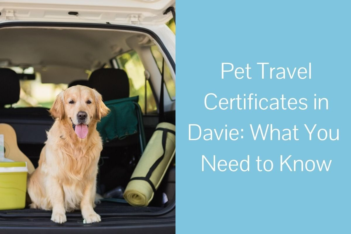 Pet-Travel-Certificates-in-Davie_-What-You-Need-to-Know