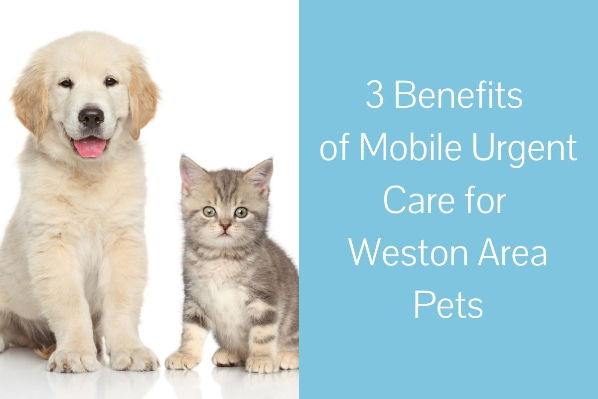 3-Benefits-of-Mobile-Urgent-Care-for-Weston-Area-Pets