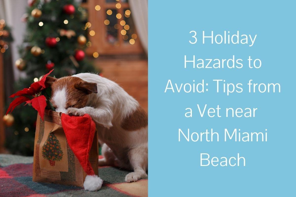 3-Holiday-Hazards-to-Avoid_-Tips-from-a-Vet-near-North-Miami-Beach