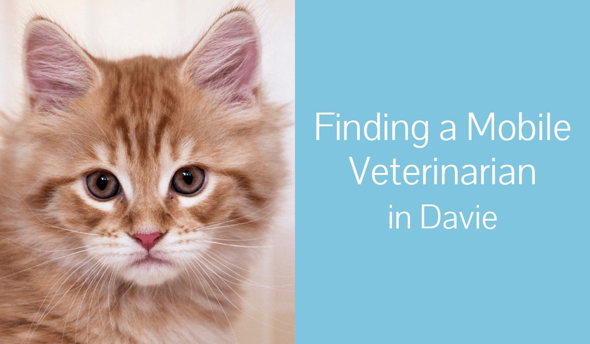 Finding_a_Mobile_Veterinarian_in_Davie1