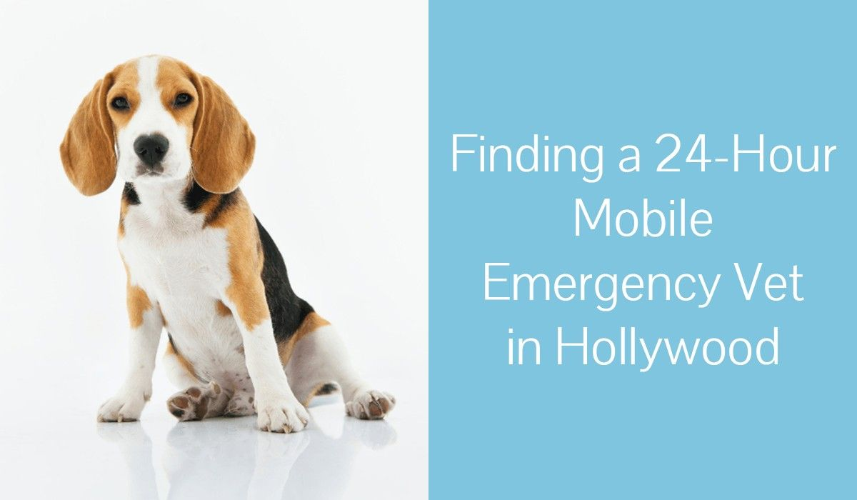 Finding_a_24-Hour_Mobile_Emergency_Vet_in_Hollywood1