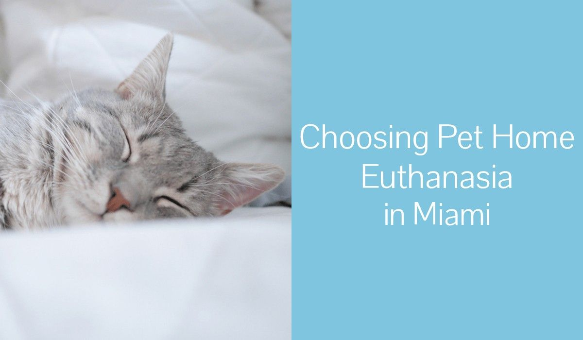 Choosing_Pet_Home_Euthanasia_in_Miami1