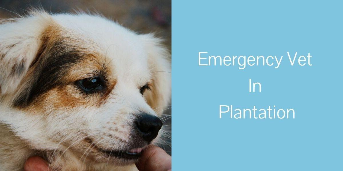 Emergency-Vet-In-Plantation