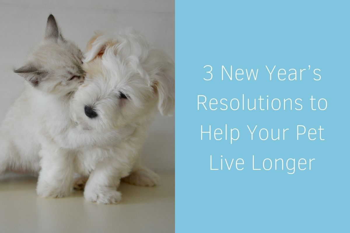 3-New-Years-Resolutions-to-Help-Your-Pet-Live-Longer-1